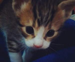 Gatos, hermosos, and gatitos image