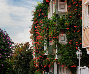 flowers, house, and istanbul image