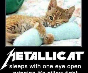 metallica, cat, and funny image