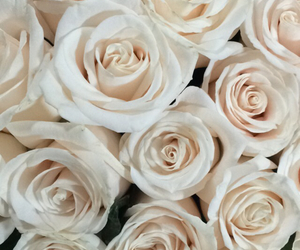 flowers, rosas, and roses image