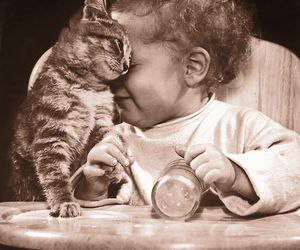 cat and friends image