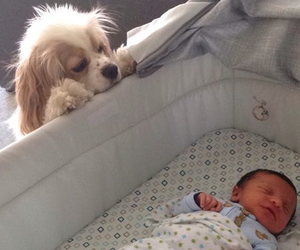 baby, puppy, and adorable image