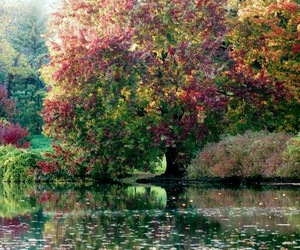 art, monet, and nature image