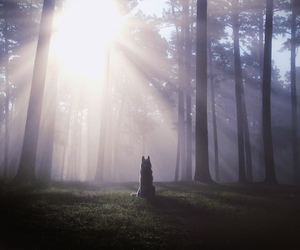 wolf, forest, and sun image
