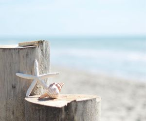 sand, shells, and starfish image