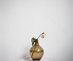 flower, vase, and photography image