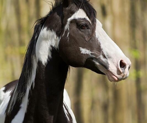 black and white, different, and equestrian image