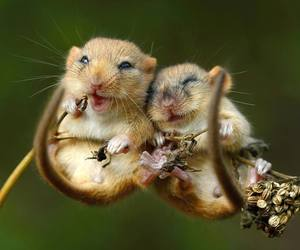 animal, mouse, and nature image