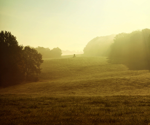 mist, nature, and photography image