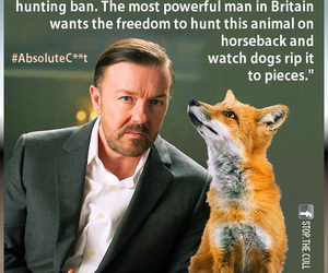 :(, foxes, and hunting image