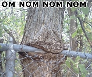 funny and tree image