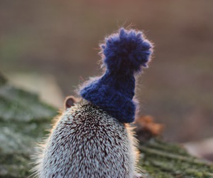 cute, hat, and hedgehog image