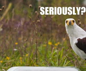 funny, lol, and bird image