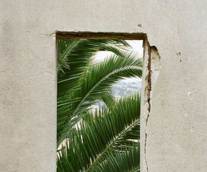 palms, green, and nature image