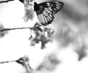 butterfly, animal, and flowers image