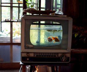 aquarium, decoration, and house image