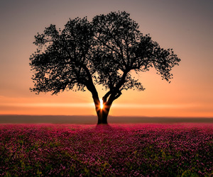 flowers, sunset, and indie image