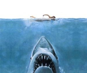 shark and sea image