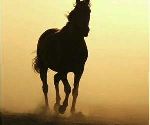 horses, life, and quotes image