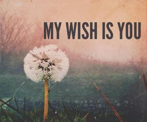 wish, you, and love image