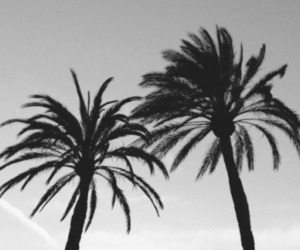 palms, black and white, and sky image