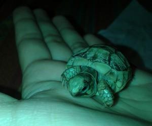 animal, animals, and hand image
