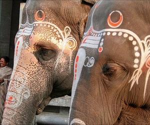 elephant, beautiful, and paint image