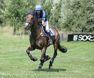 cross country, horse, and horses image