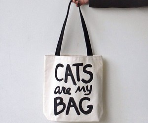 tumblr. cats. bags. image