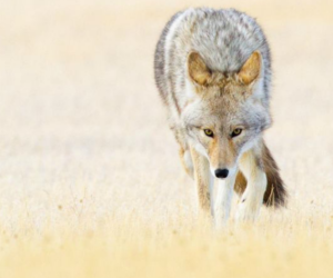 animal, heart, and wild image