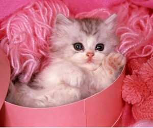 :), pretty cat, and so beautiful image