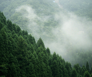 beauty, fog, and forrest image