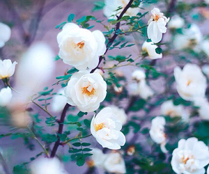 flowers, white, and beauty image