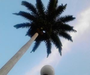 blue, palm, and sky image