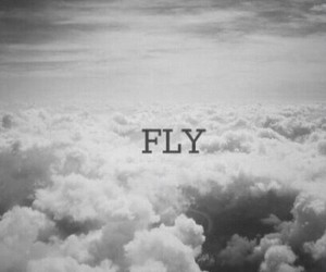 fly, sky, and black and white image