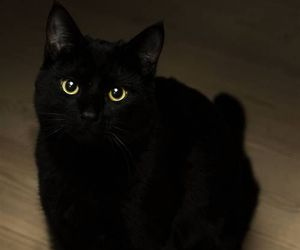cat, black, and boy image