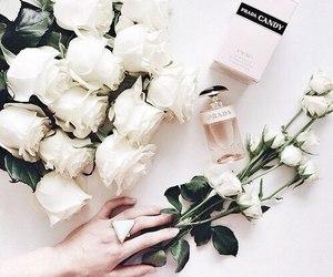 flowers, rose, and Prada image