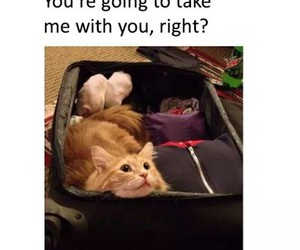 cat, holiday, and travel image