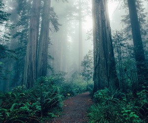 forest, photography, and vintage image