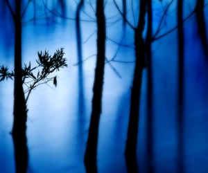 blue and forest image