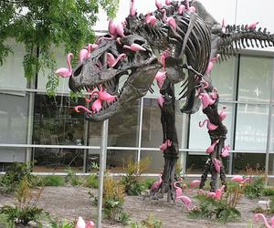 dinosaur, pink, and flamingo image