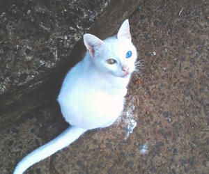 blanco, colores, and ojos image
