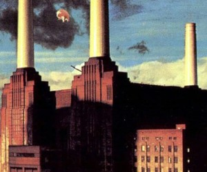 Pink Floyd, animals, and wallpaper image