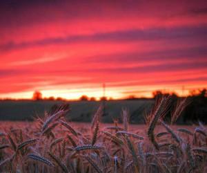 barley, beautiful, and day image