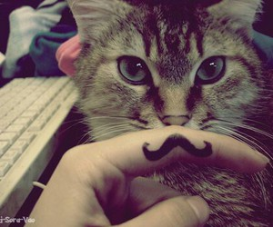chat, moustache, and swagg image