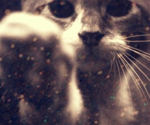 cat and glitter image