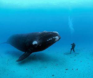 whale, ocean, and sea image