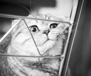 cat, cute cat, and sad cat image