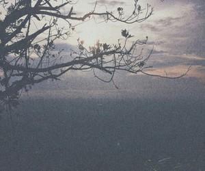 tree, indie, and sky image