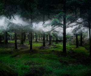 forest, magic, and mist image